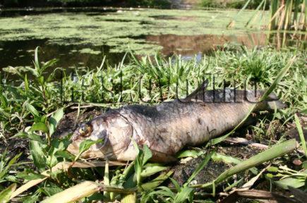 Мъртва риба