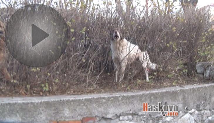 Бездомни кучета нападнаха жена