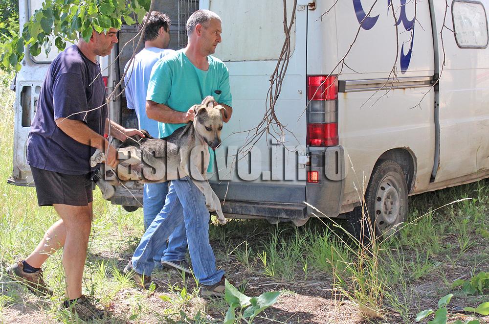 Предлагат 48 лв. да струва залавянето на изпуснато домашно куче в Хасково