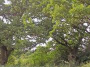 Дървета