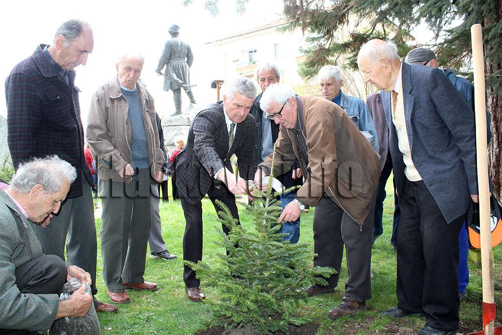 Засадиха елхичка до паметника на Капитан Петко войвода в Деня на Тракия